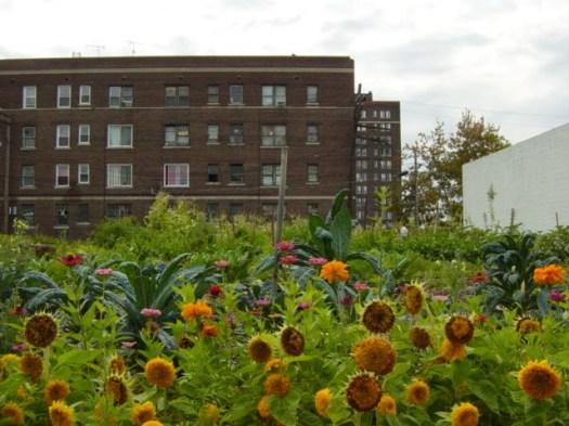D-Town-Farm-Picture